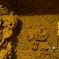 terrabau19