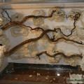 Rückwandbau im Becken der chin. Flugfrösche