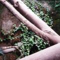 Pflanzen und Wasseragamen