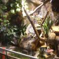 Anolis Terrarium mit Bachlauf