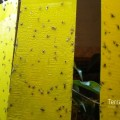 719dfeba.lMückenplage1