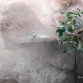 Bau Doku des zweiten Terrariums für meine Wasseragamen
