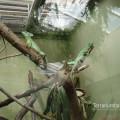 Reptilienhaus  Zoo Leipzig