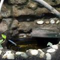 Wasserbecken Filterung (mit Zeolith)