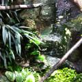 Wasseragamen