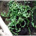 Wasseragamen Terrarium, Hypertufa
