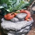Schlange auf/in Wetbox