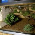 Terrarium für Brachypelma emilia