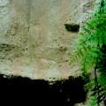 Aufzuchtterrarium Wasseragamen