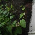 Pflanzen im Krötenbecken