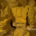 terrabau16
