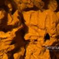 terrabau22