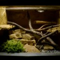 Terrarium für DNZ Pantherophis guttatus